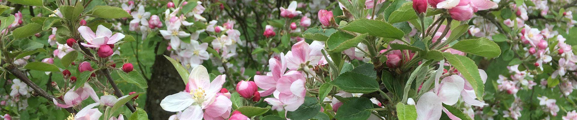 printemps32017